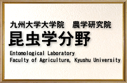 Entomological Laboratory Faculty of Agriculture, Kyushu University