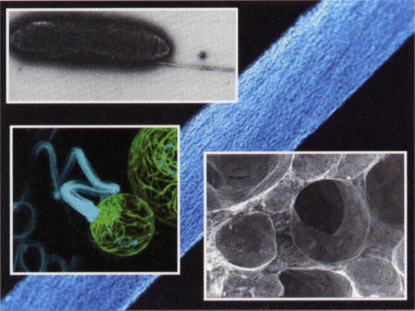 Biomaterial Design