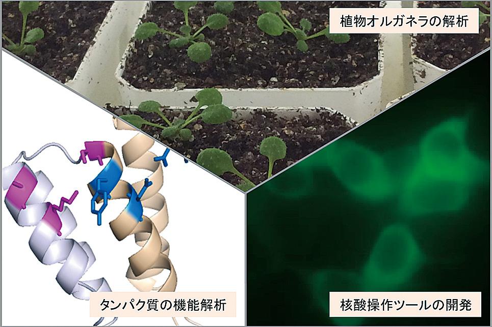 Genome Chemistry & Engineering