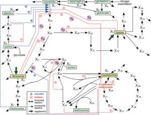 Bio-Process Design