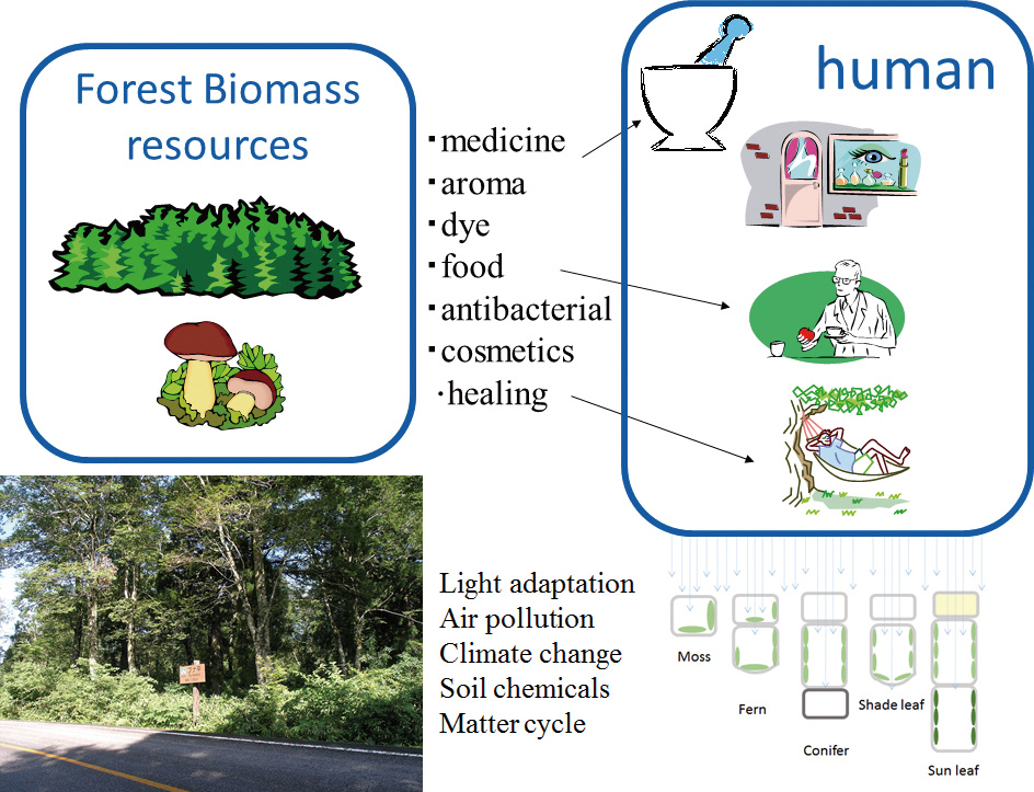 Systematic Forest & Forest Products Science