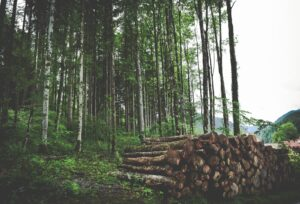 Forestry and forest products
